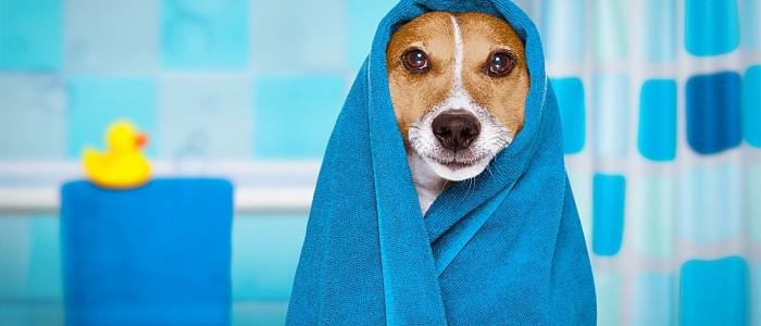 Baño para mascotas, cómo adaptar la ducha a tu animalito